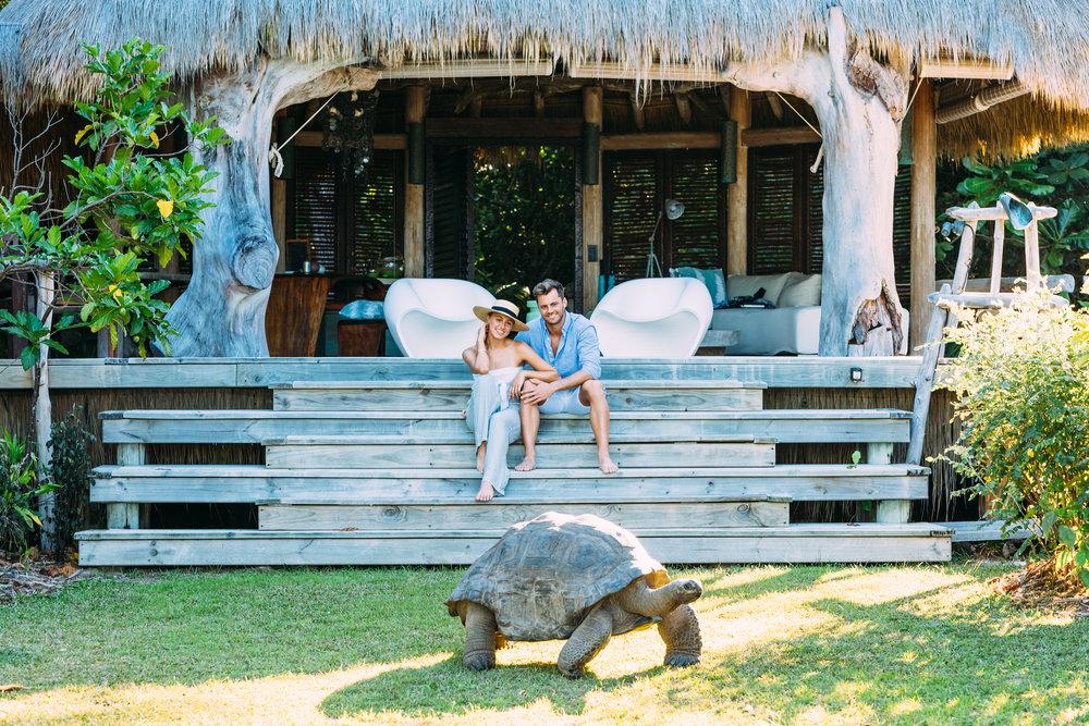 North Island - Tortoise in Villa - 2500px.jpg