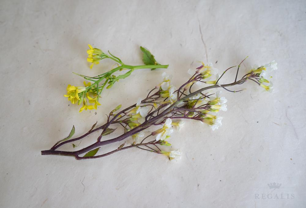 mustard flower.jpg