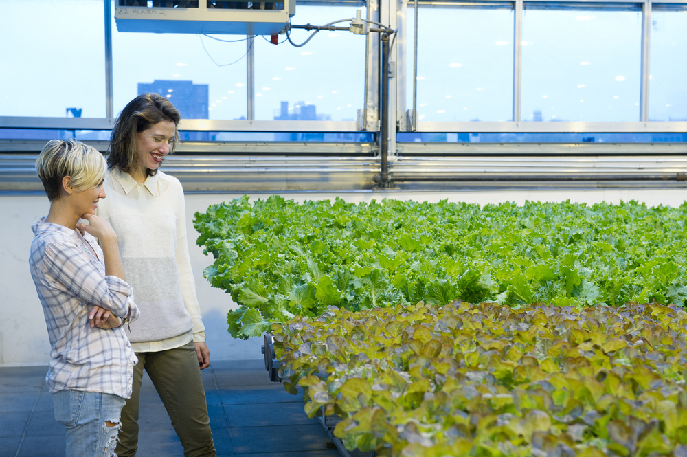 MEET: Nicole Baum of Gotham Greens