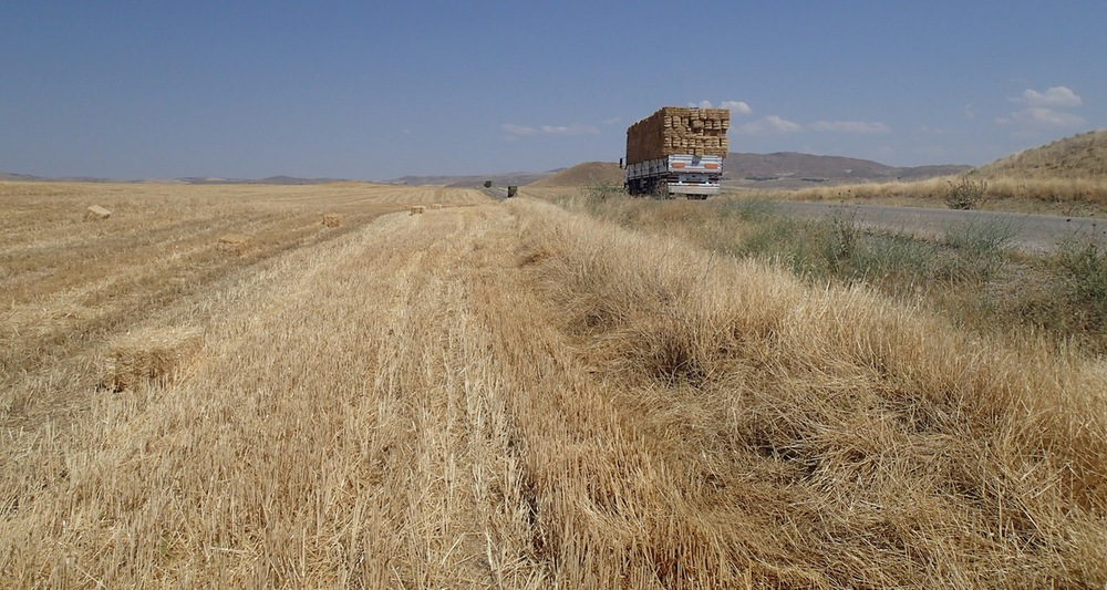 Golden hayfields, central Turkey. View from roadside near Gordion (modern Yassıhüyük), home of the legendary King Midas.