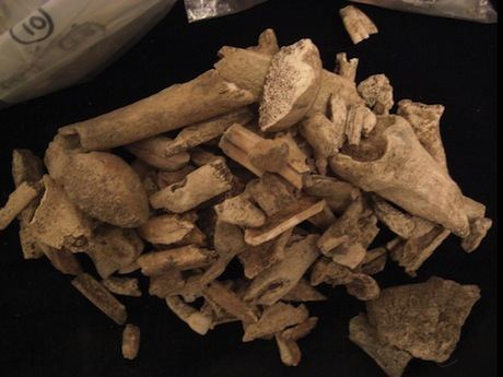 Animal bones from the archaeological site. Image from here.