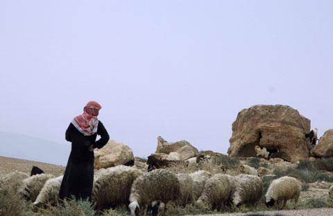 Shepherd, sheep, and goats.