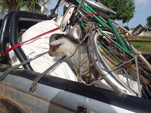 Give and you will receive. We give a bike but gain a goat. The goat rides in the truck for the rest of the journey. He tries to commit suicide only once .