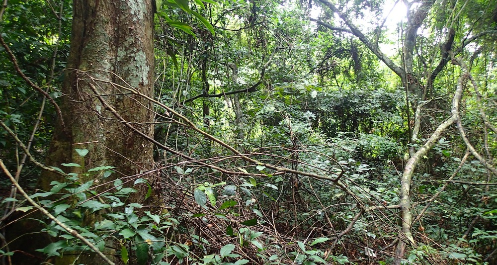 The rainforest of coastal Ghana.