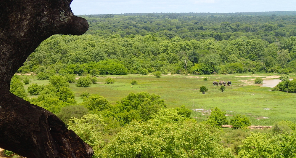 View from the summit. The elephants return to the water.