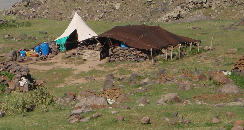 Summer encampment for a herding family. Note the dung cakes arranged on rocks on the edge of the camp.