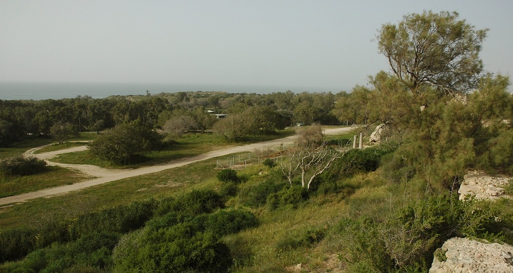 View from the perimeter defenses to the center of old Ashkelon.