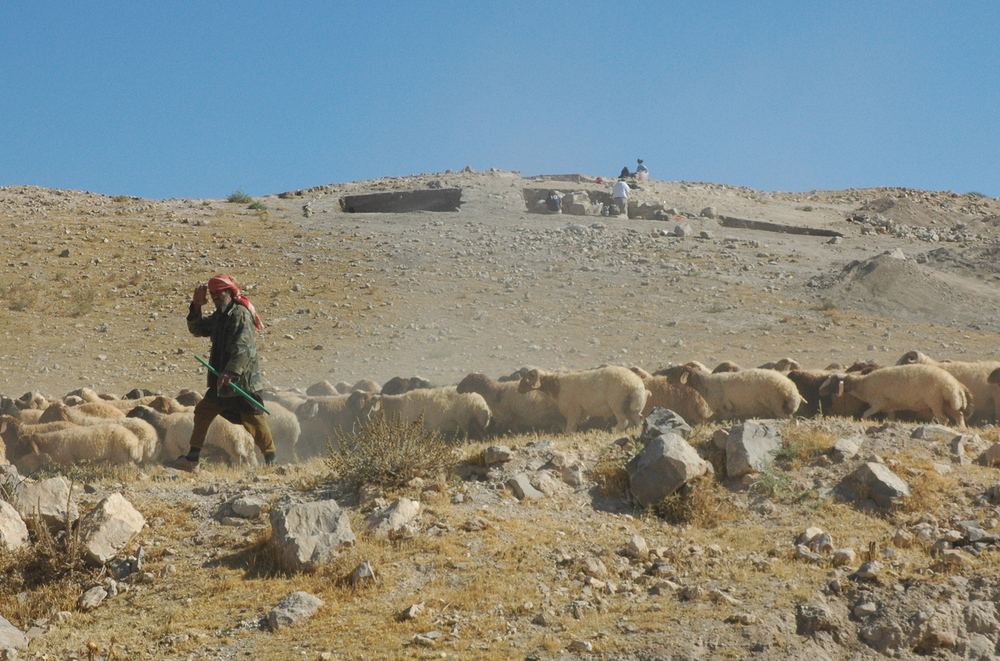 The shepherd waves Marhaba! Tell Jalul's Field H is on the rise beyond.