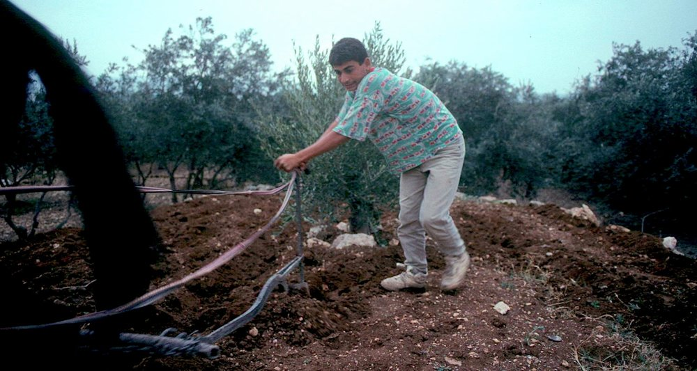 Plowing in an olive grove near Beth Horon. late Nov. 96 (2).jpg