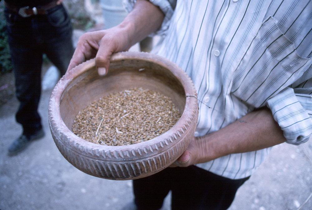 feed bowl.jpg