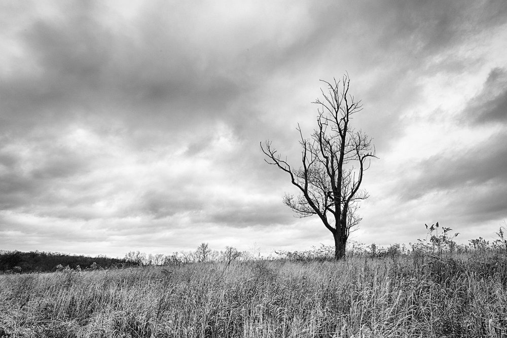 "Shaker Village Dead Tree ""Rule of Thirds"""