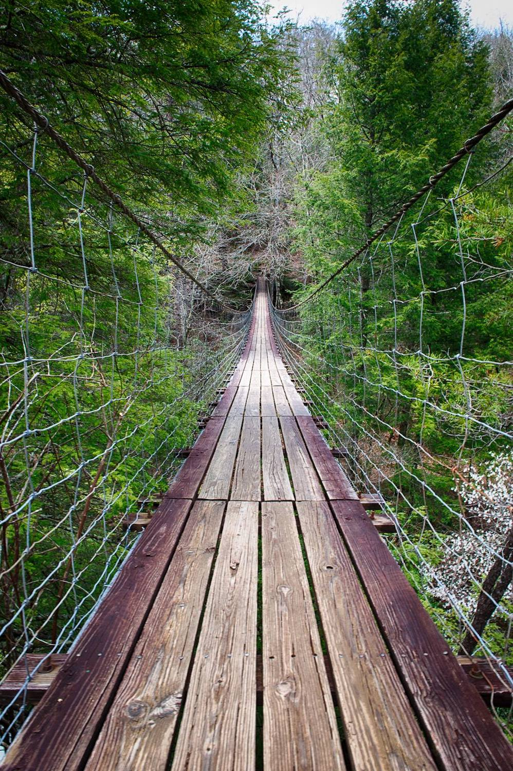 Falls Creek Falls Suspension Bridge