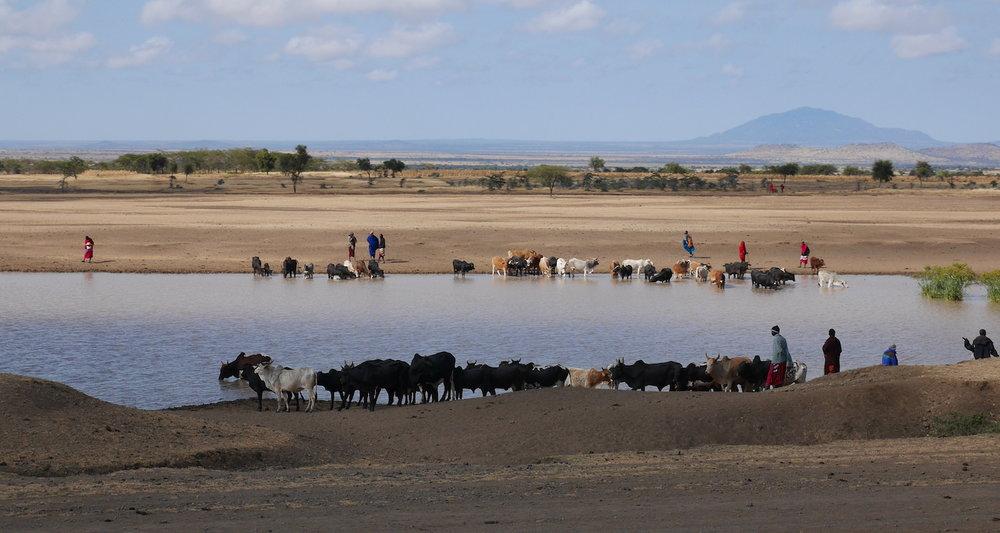 A busy waterhole west of Arusha.