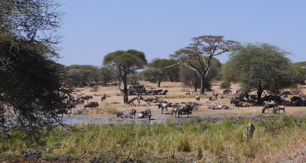 We approached our first waterhole. There were easily a hundred animals here.