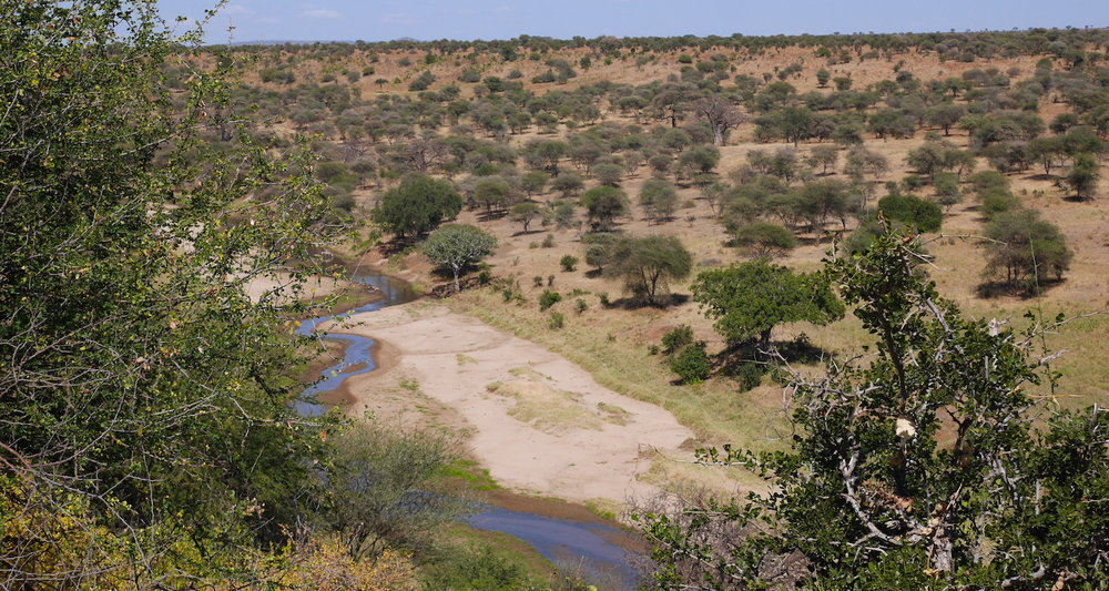 The Tarangire River runs like an artery through the center of the Park. We stopped at this bluff hoping to see elephants. We were given a fine view, but it did not include elephants.