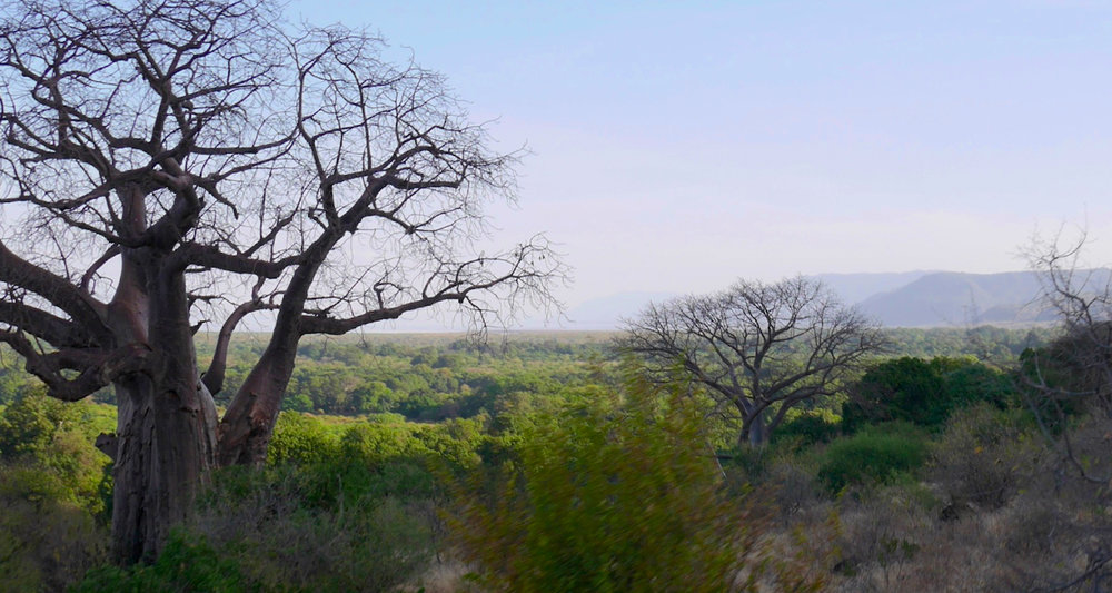 Descending the Great Rift Escarpment. The escarpment drops to the surface of Lake Manyara.