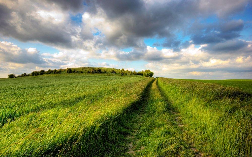 tall-grass-field-wallpaper-1.jpg