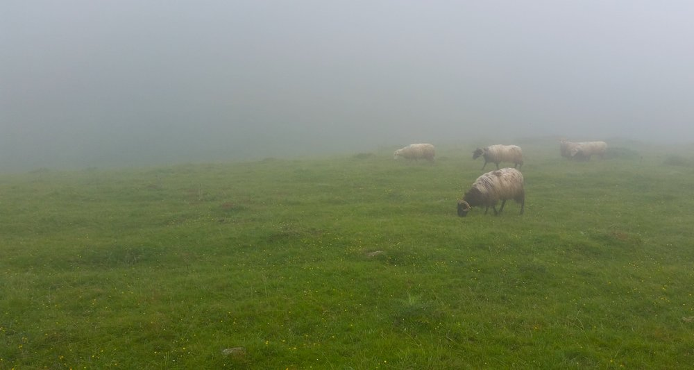 We crossed the path of many sheep. They provided little surprise or entertainment.