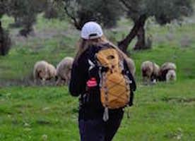 JT sheep.jpg