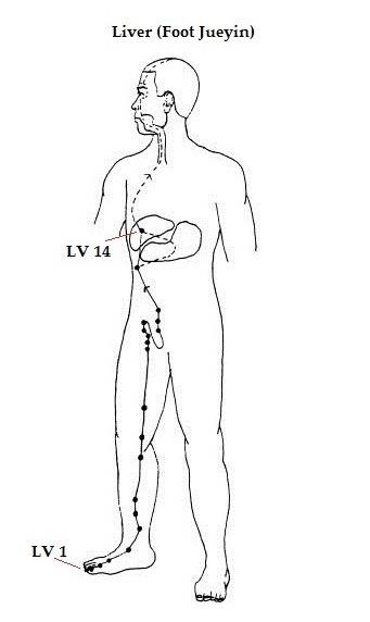 Liver Meridian- Annie Au Yoga