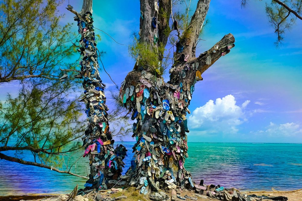 Cayman Shoe Tree