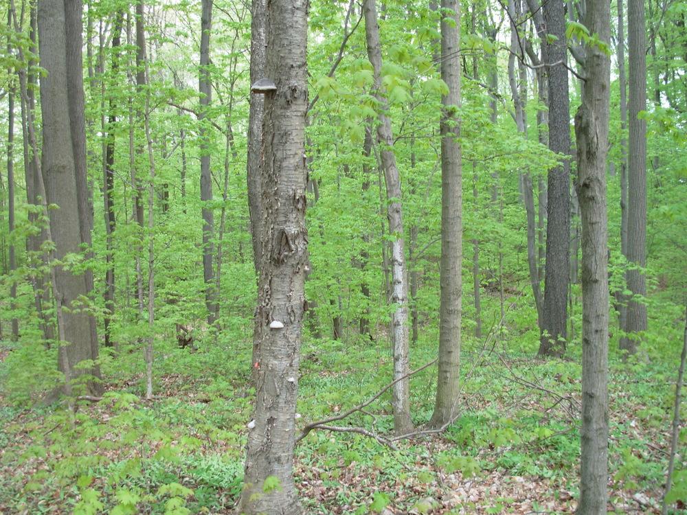 forest.jpeg.JPG