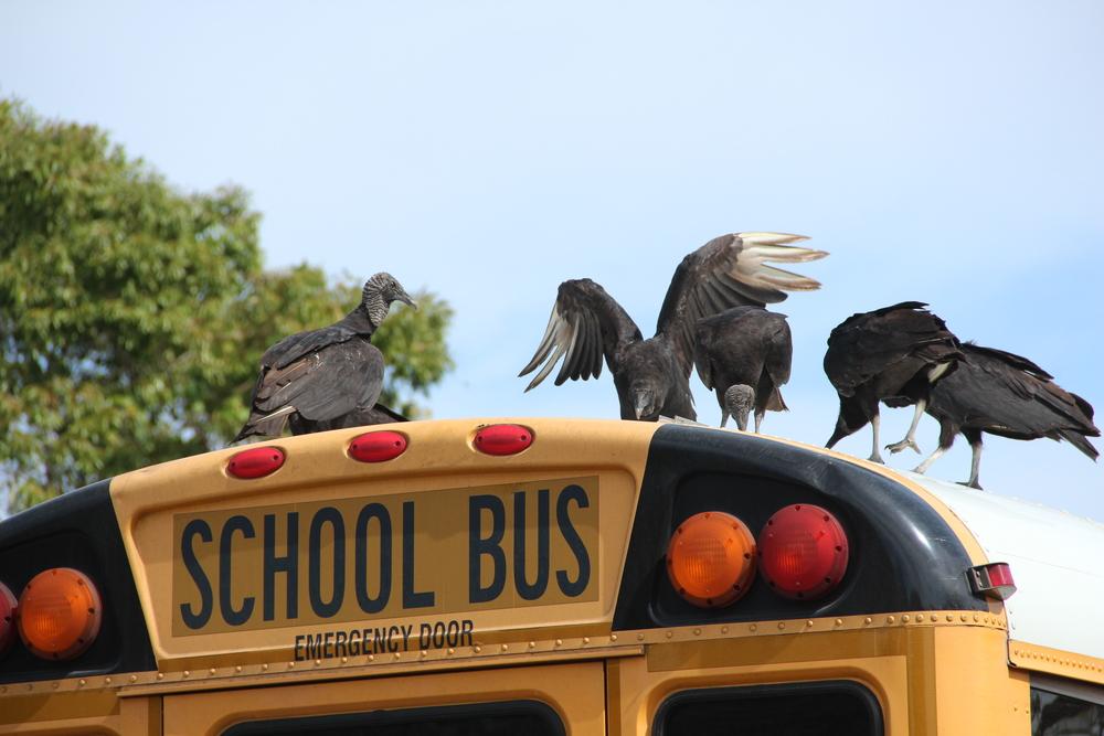 Delinquent birds