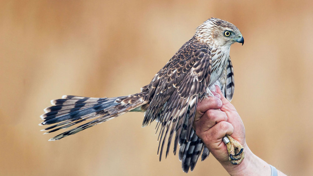 Harold Stiver/Alamy, Audubon