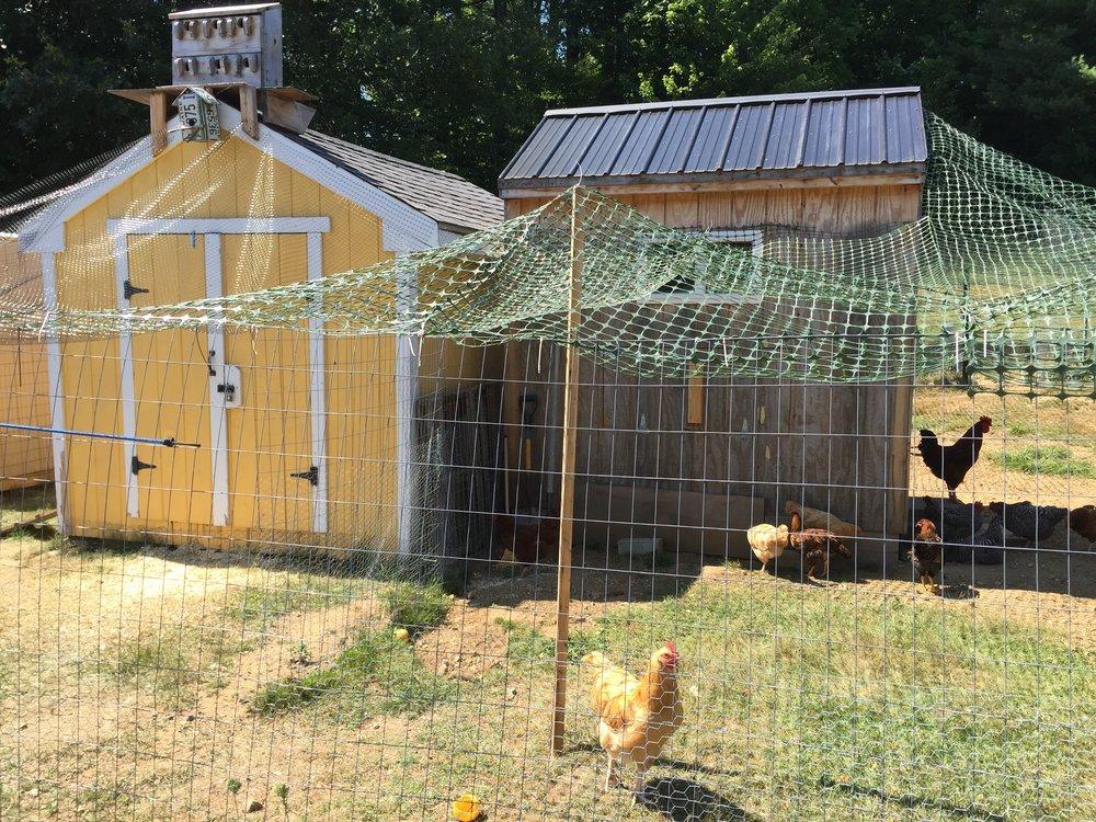 henhouses.jpg