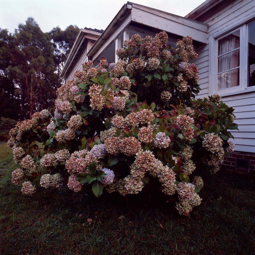Tasmania 81