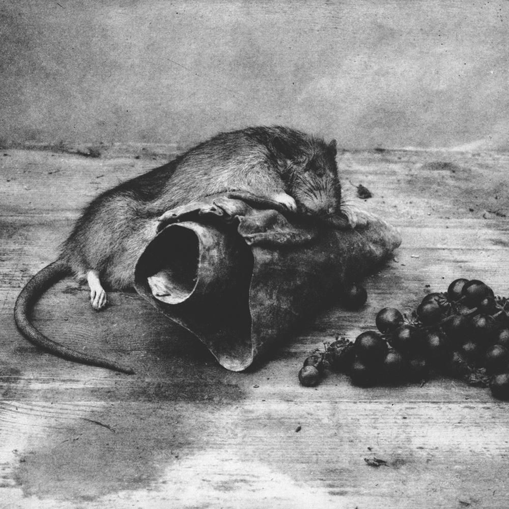 Hendrik Faure.jpg