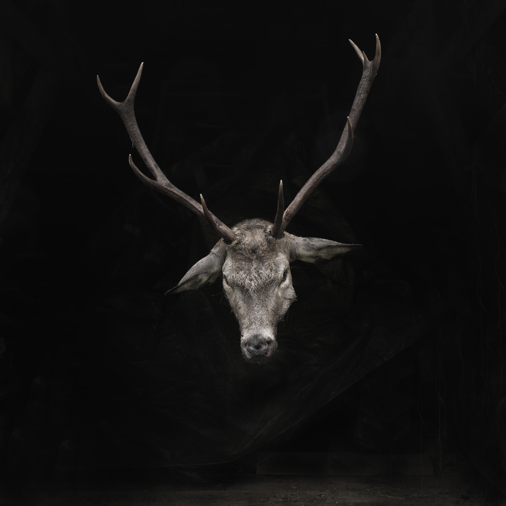 Deer head front #1