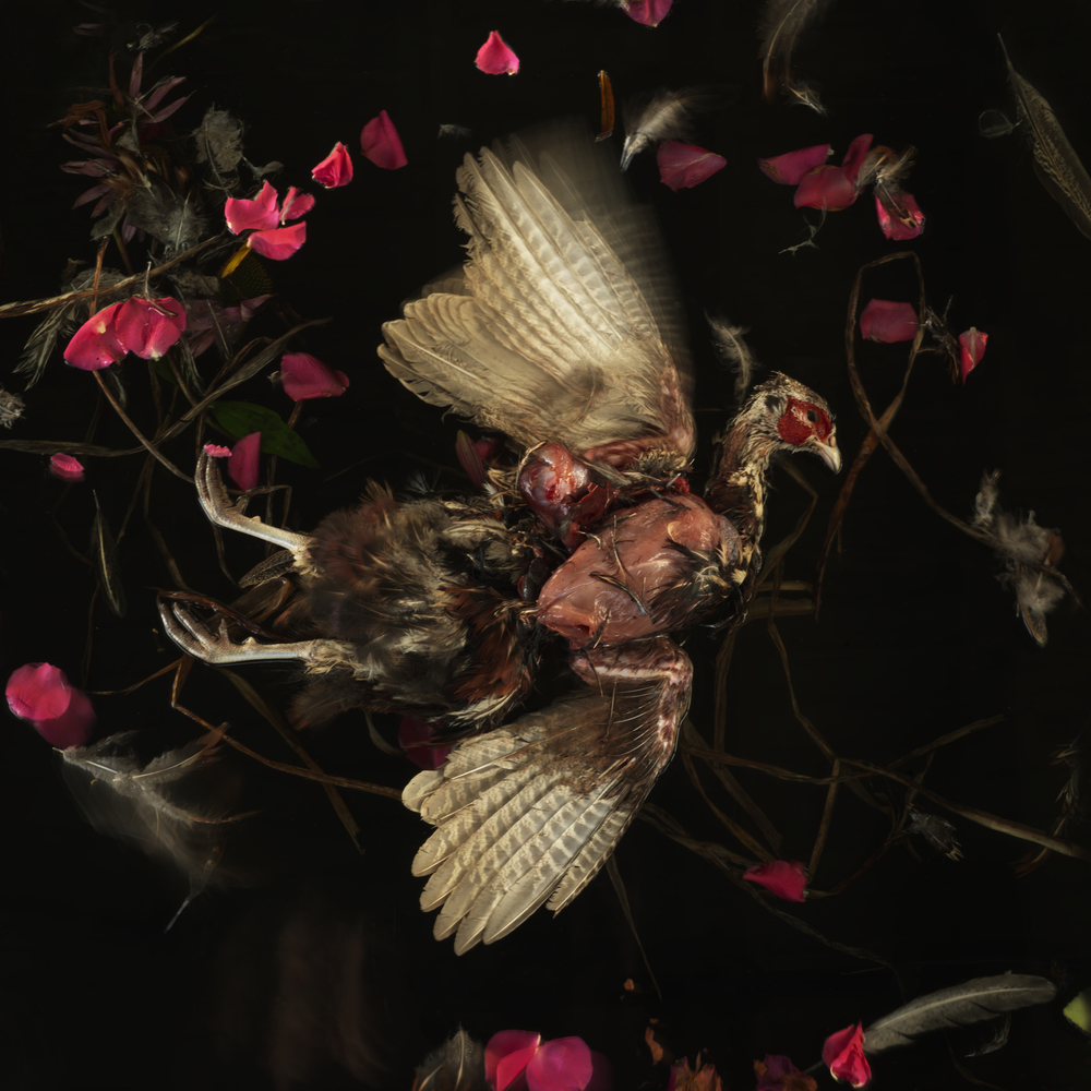 Pheasant #12