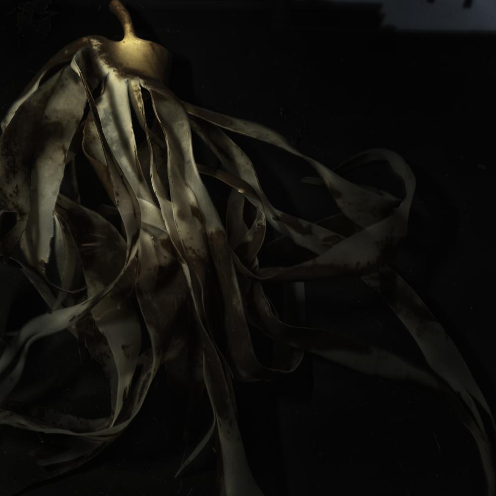 Seaweed #5