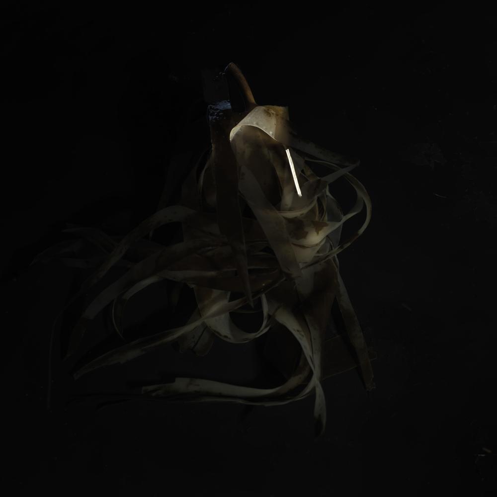 Seaweed #7