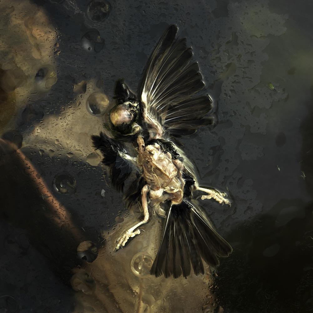 House sparrow #20