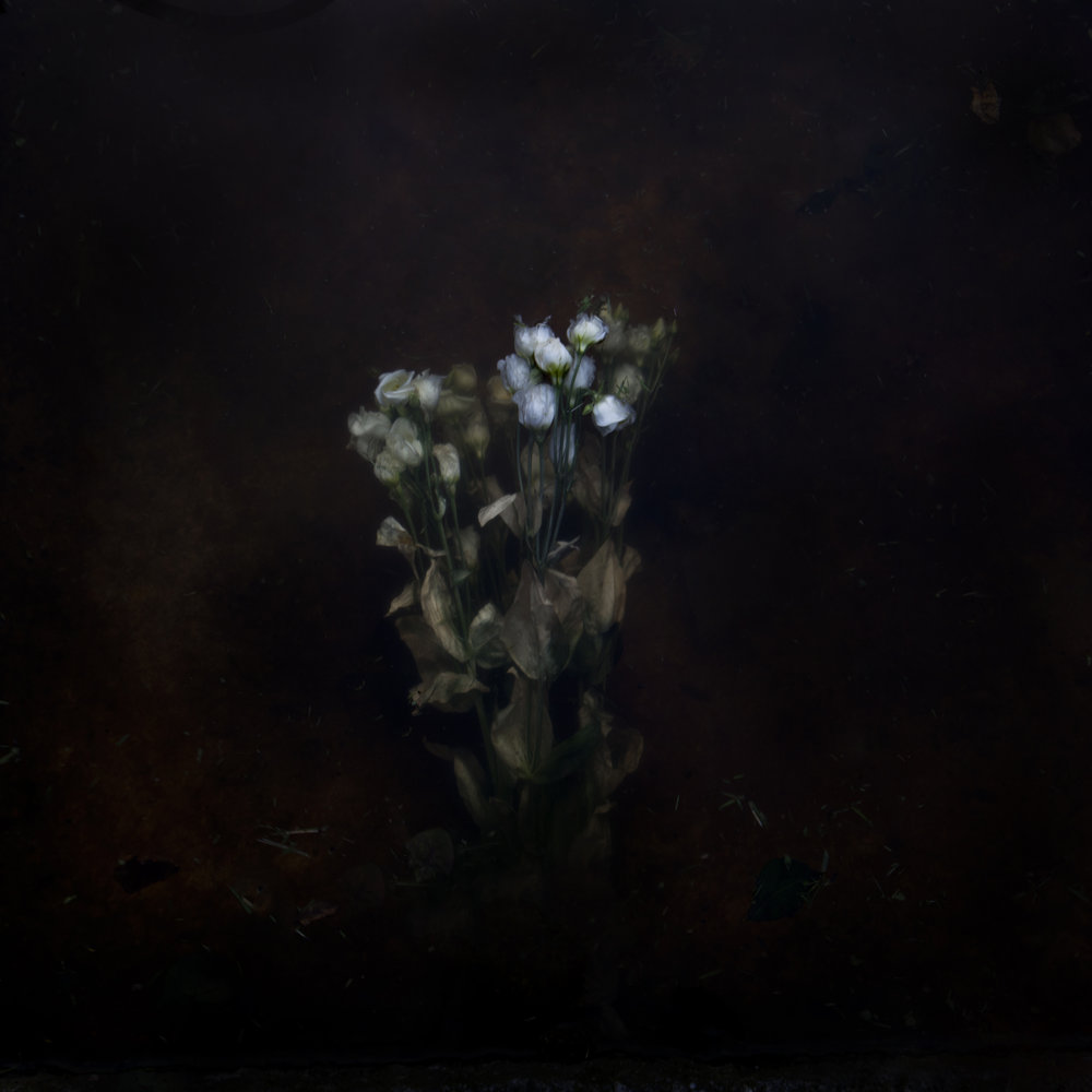 Plantis #15