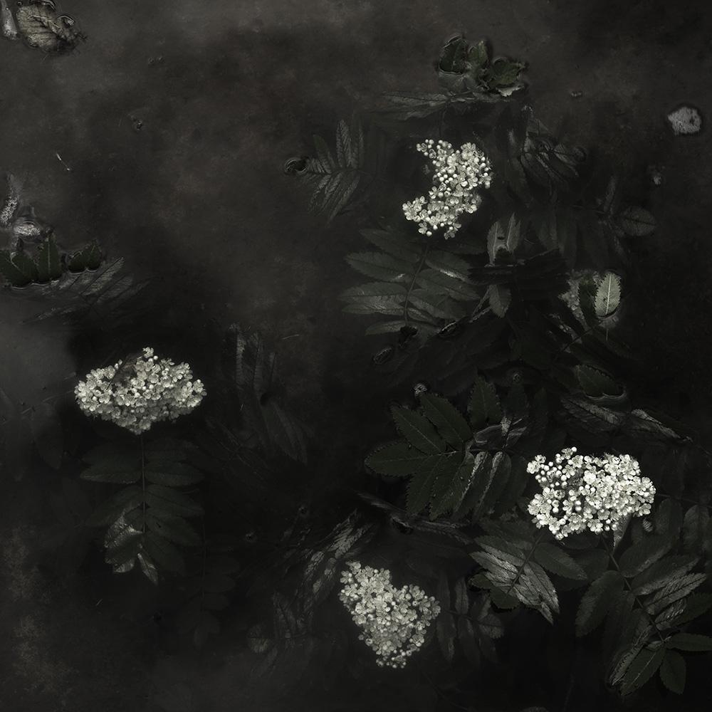 Plantis #16