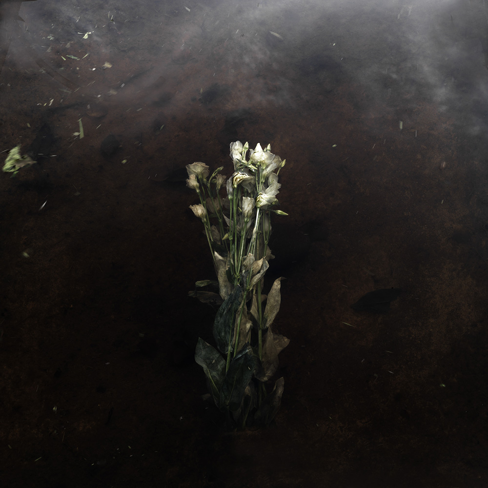 Plantis #17