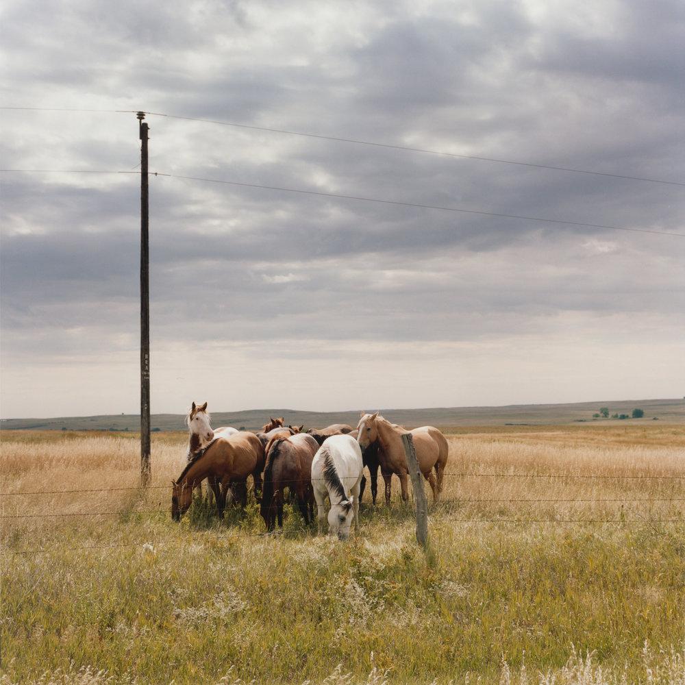 Horses Cannonball