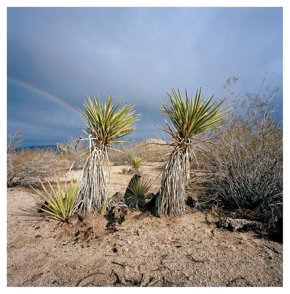 Desert 030.jpg