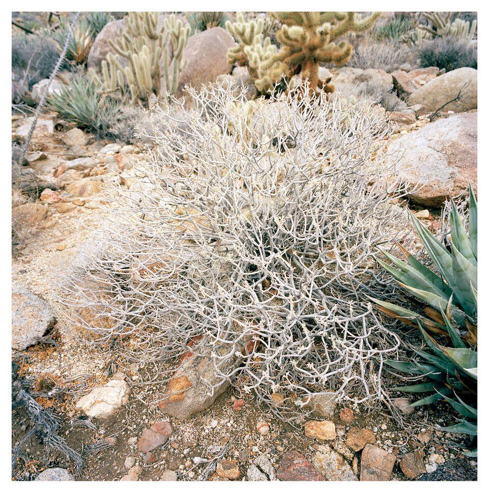 Desert 018.jpg