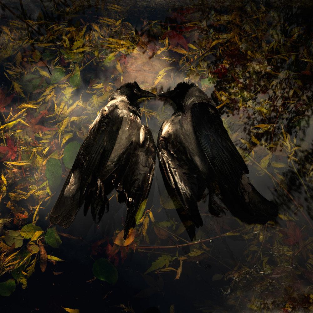 Crow Kiss #2