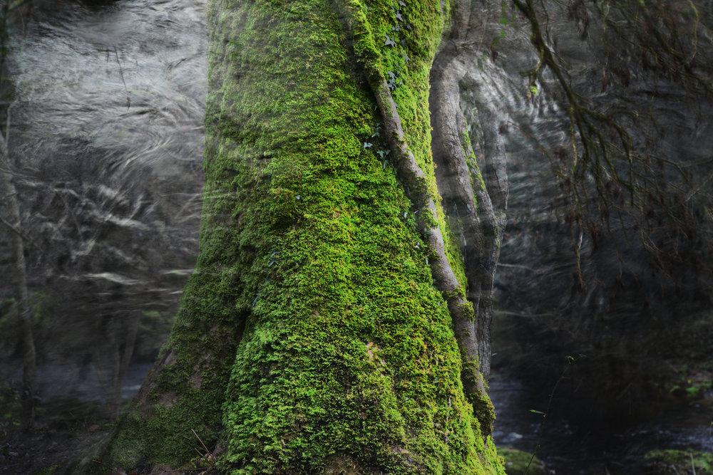 Mosstrunck