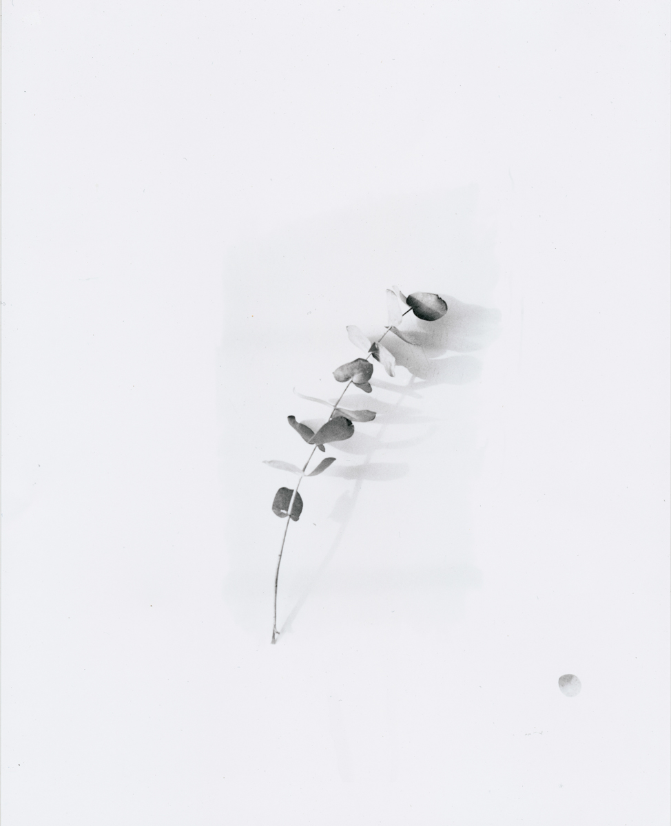 25.5 x 20.5 cm, silver gelatin print, 2016