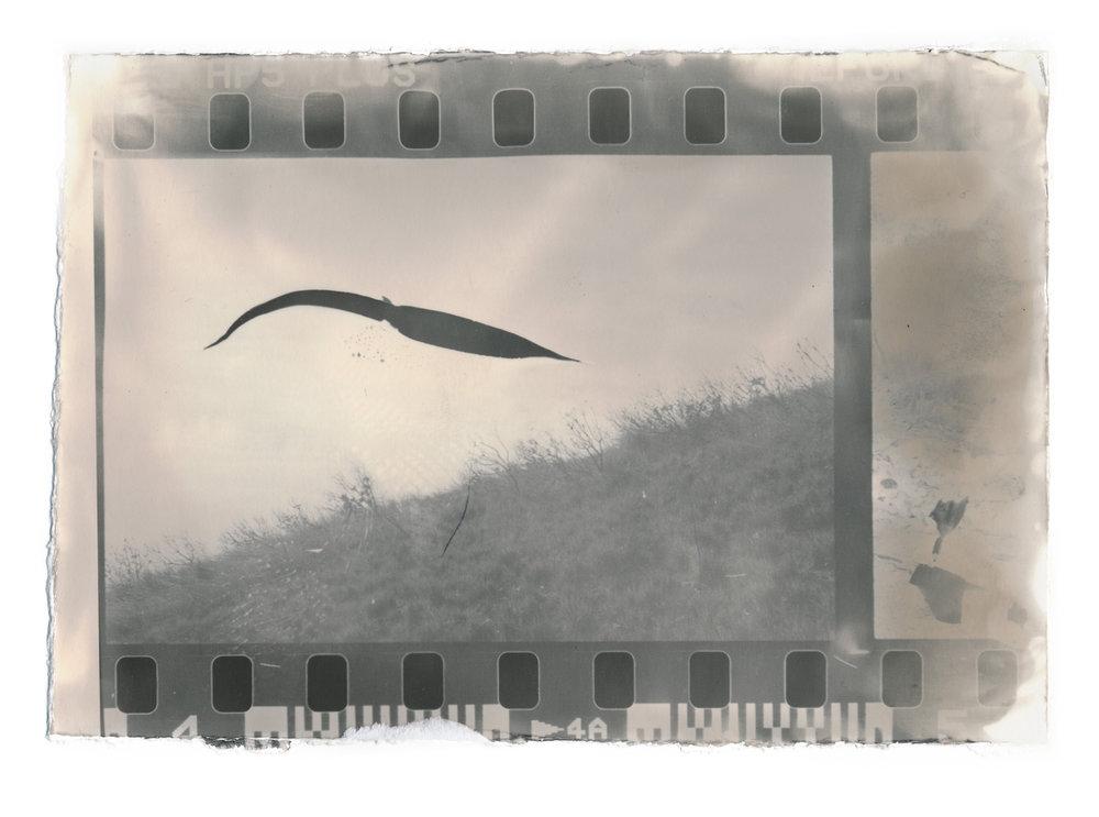 18 x 12.5 cm, silver gelatin print, 2016