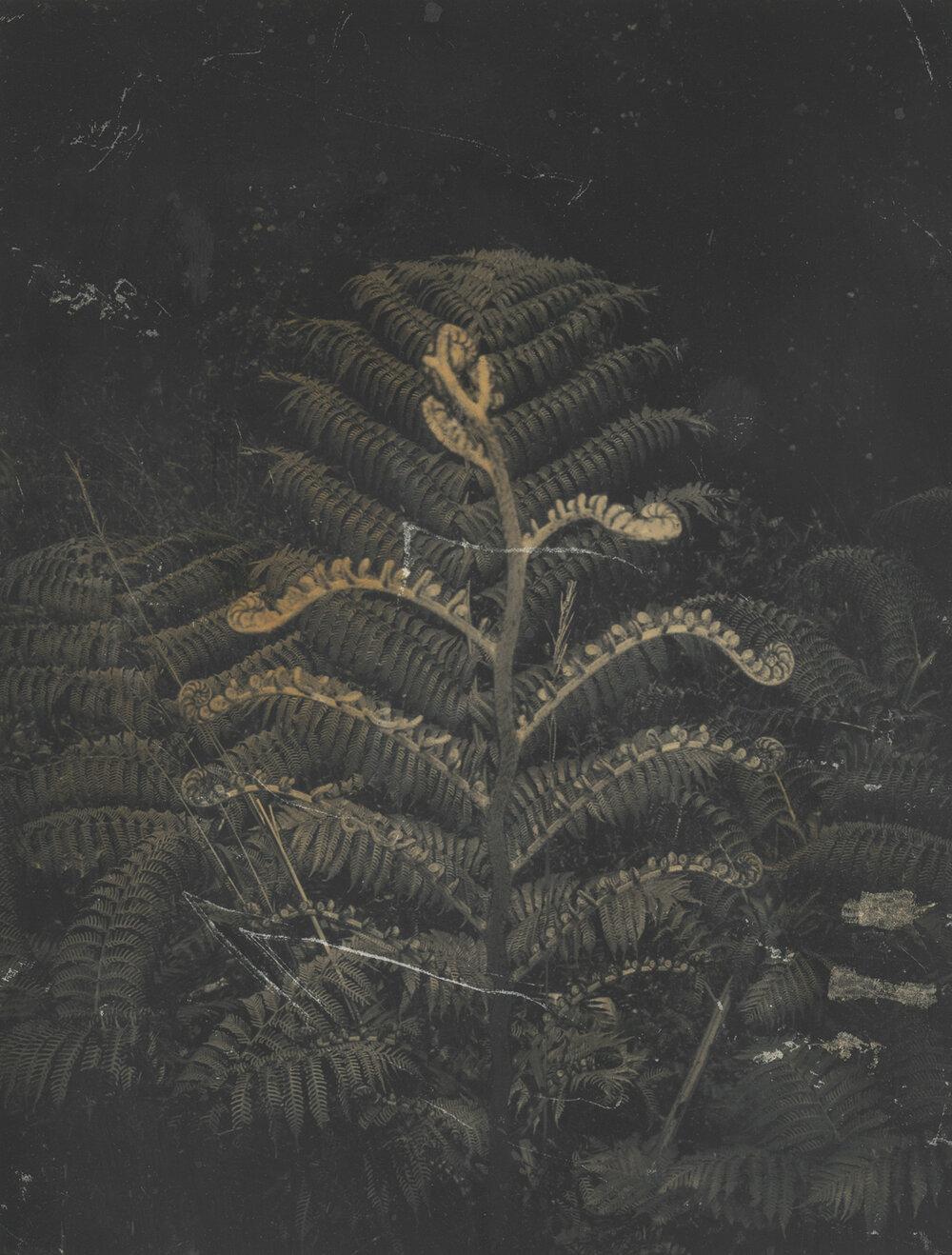 autumnal glimpses scans151213.jpg