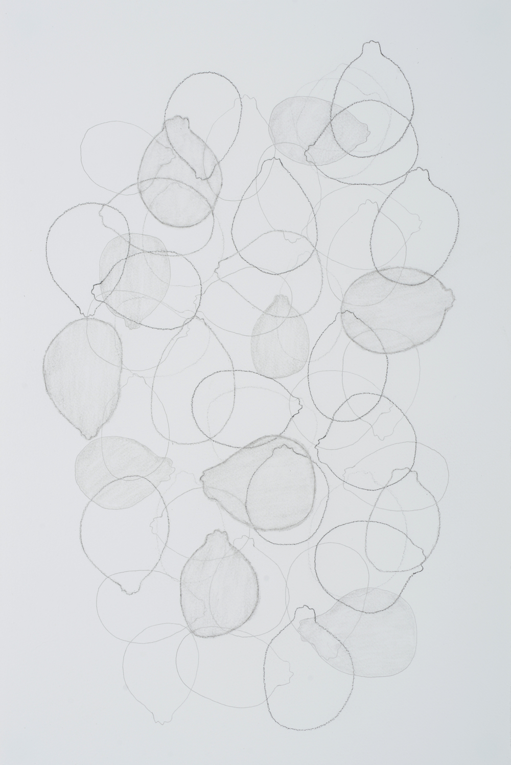 "subtle bodies | lemon (02), 2016 | graphite on paper | 18"" x 12"""