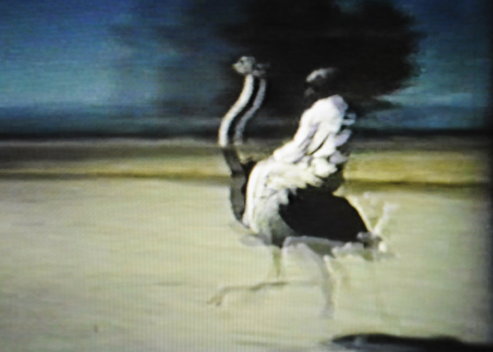 A day at the Ostrich Races