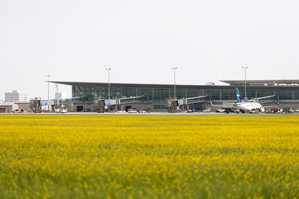 YWG in the fields (2 of 6).jpg